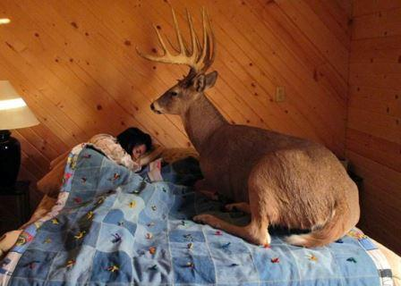 A big buck sits in bed with a sleeping hunter