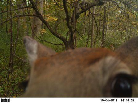 which-trail-camera-doe-eyes