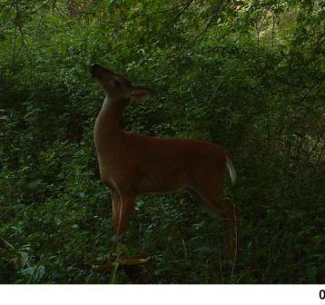 which-trail-camera-doe-lick