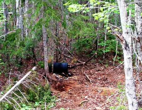 Countdown to a Canadian Bear, Part 2 - Active Bait Site