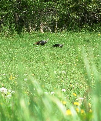 Are You Making These 7 Turkey Hunting Mistakes? Part 3, by Steve Sorensen - Image 1