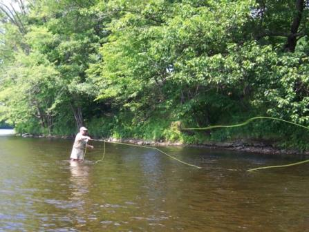 Fly fishing smallmouth bass in rivers and streams
