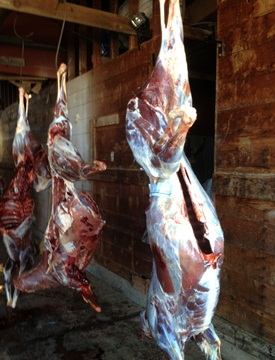 Table Mountain Outfitters skinning shed showing antelope meat hanging