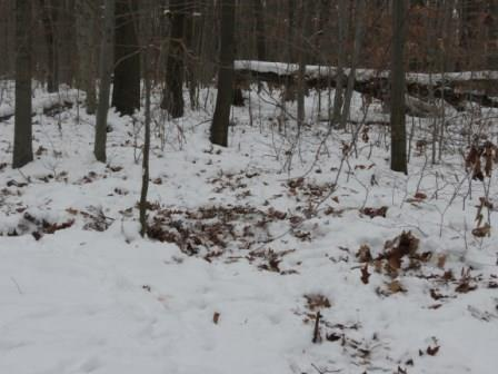 Snow in the woods change the way deer move