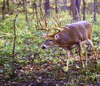 barry-harvested-buck-with-rack-measuring-190inches-390x336
