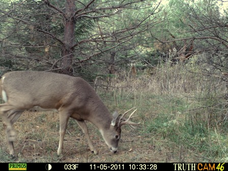 buck checking enhanced scrape