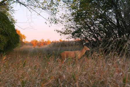 field corners great place for decoy 448x299