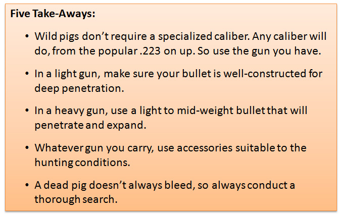 Five things to remember when hog hunting.