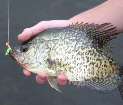 How to fish for crappie as told by Slab