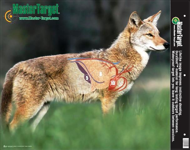 know-anatomy-of-coyote-607x480