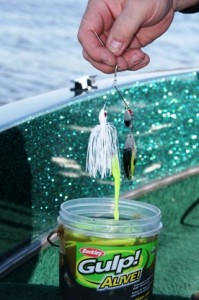 spinnerbait dipped in gulp juice