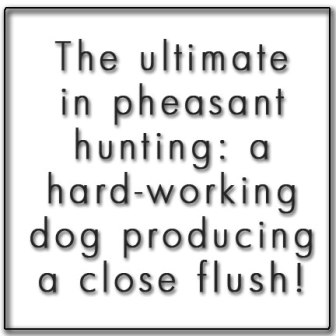 ultimate-pheasant-hunting-text-box-336x336